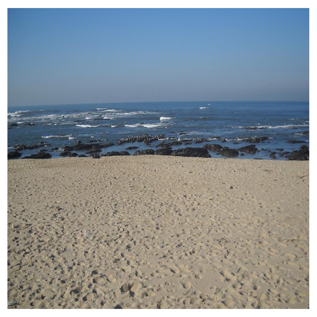 Praia de Francelos